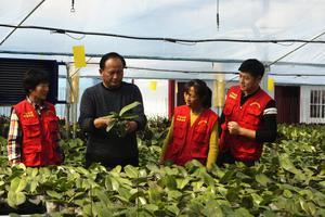 2020年河南农业大学硕士研究生招生简章