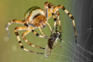BBC媒體英語:以蜘蛛網為靈感的雙面膠帶可粘合傷口
