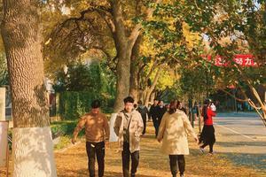北京林业大学2020年招生工作章程