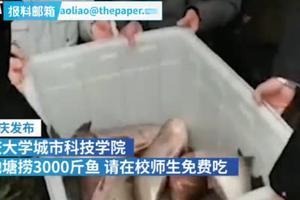 重庆一高校池塘捞3000斤鱼 请在校师生免费吃