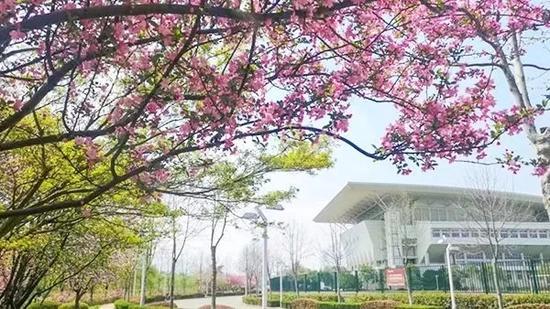 南师大仙林校区。图片来自南师大本科生招生公众微信