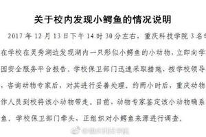 重庆一高校湖内发现鳄鱼 校方正调查其来源