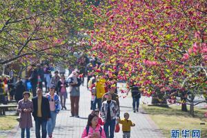 福建农林大学春意盎然 游客市民前来赏花(图)
