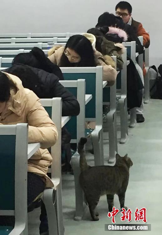 """猫咪在考场内""""巡逻""""。伍洁摄"""