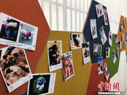 狗年生肖文物图片联展在皖展出:传承中
