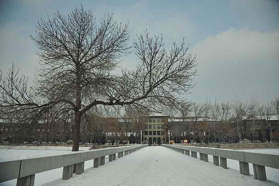天津大学校园雪景 张宇 陈铮杰摄