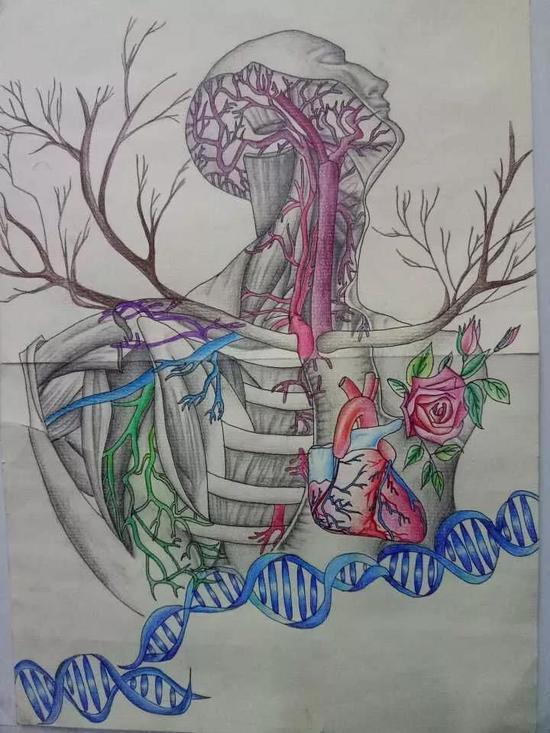 医学生手绘解剖图艺术感十足(图)(3)