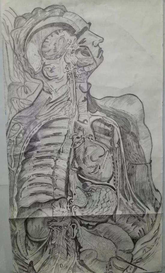 医学生手绘解剖图艺术感十足 图