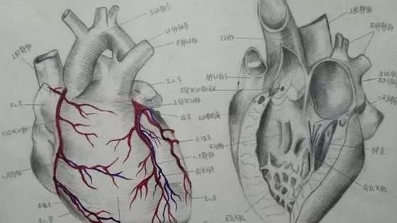医学生手绘解剖图艺术感十足(图)