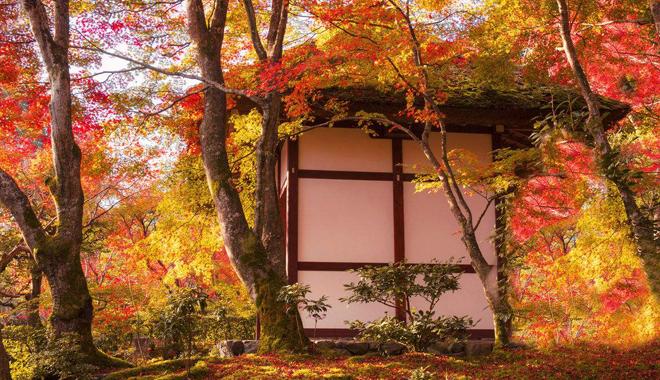 日本4大温泉乡 私藏了最美的红叶季