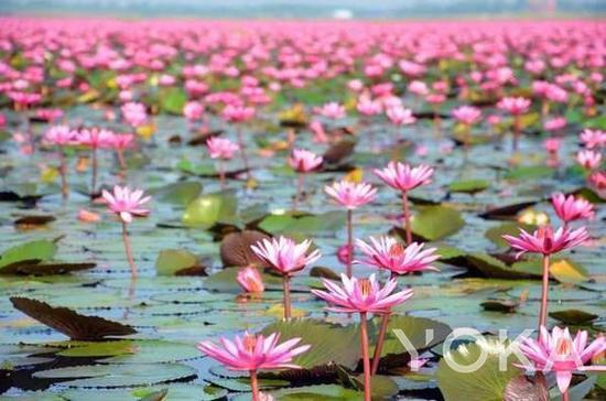 泰国红莲湖