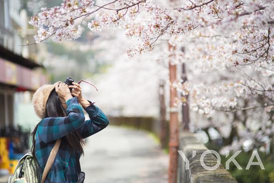 日本赏樱 图片来自海洛