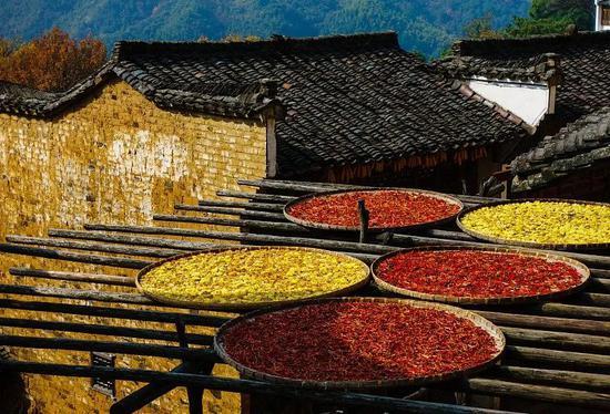 家家户户晒辣椒的婺源。图/视觉中国
