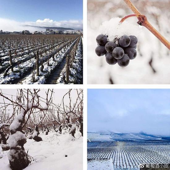 知否VOL.7:近十年勃艮第葡萄酒年份孰好孰坏?