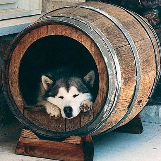 """知否VOL.11:如何鉴定一个""""伪""""葡萄酒行家?"""