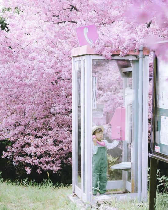 """妈妈""""偷拍""""樱花树下的儿子 美成宫崎骏童话"""