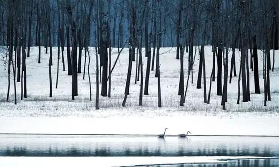 《黄河故道的冬》