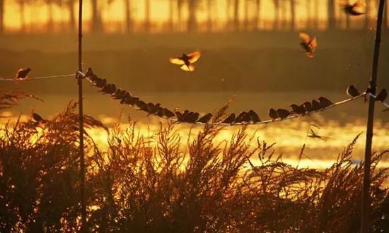 《黄河故道·秋》摄于2011年10月