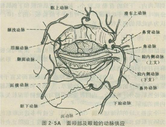 有了这些解剖学知识,对眼睛的解剖有了充分的了解,下面我们看看双