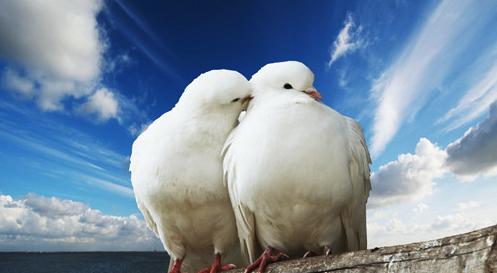 情侣关系的大声宣言