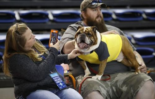 参赛犬和主人。
