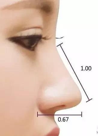理想的鼻子长度