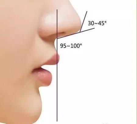 标准鼻头侧面
