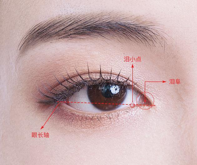 眼角结构图