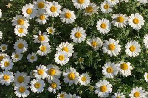让花季少女上线吧 快把自己种在五月的花田里