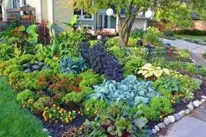 花园就是菜园?这才是种花的最高境界