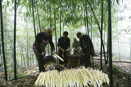 Bamboo-related industry boosts income for people in China's Guizhou