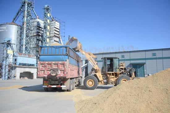 China's Heilongjiang enters rice purchasing, processing season
