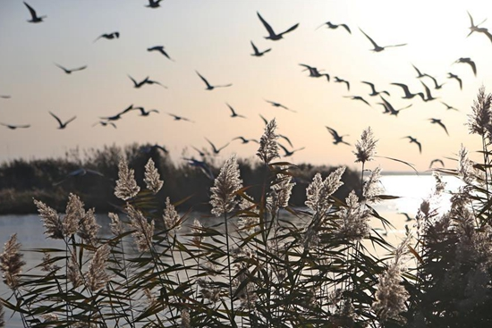 Scenery of Juyanhai Lake in N China's Inner Mongolia