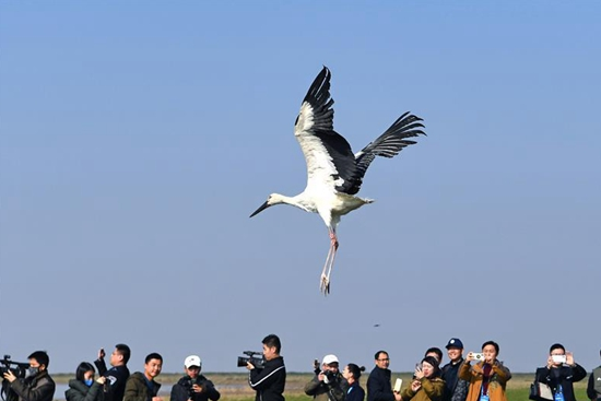 120 cured migrant birds released into wild in Jiangxi