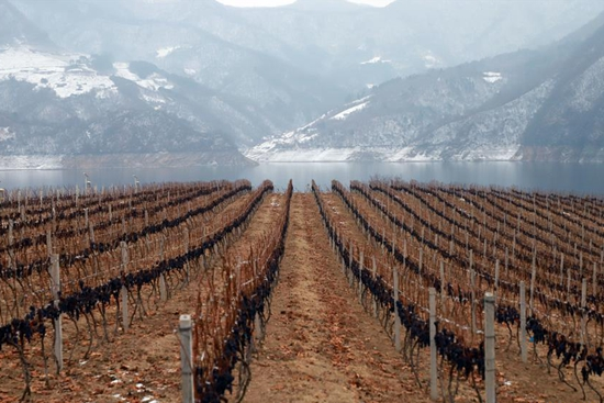 Ice wine festival kicks off in Ji'an