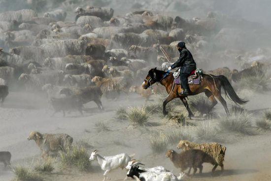 Seasonal livestock migration in Altay