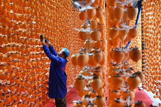 Persimmon industry boosts people's income in Fuping county, Shaanxi
