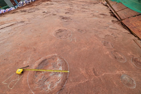 """Dinosaur dance floor"" discovered in east China's Fujian"