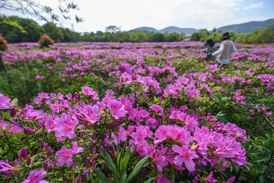 Flowers in full bloom as temperature rises in Changxing, E China