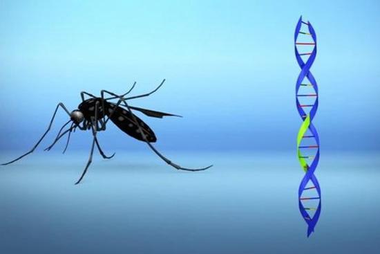 双语热点:以蚊灭蚊?美国佛州释放7.5亿只转基因蚊子