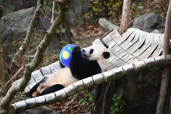 U.S. national zoo begins weeklong goodbye to giant panda Bei Bei