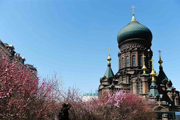 Flowers seen against St. Sophia Cathedral in Harbin
