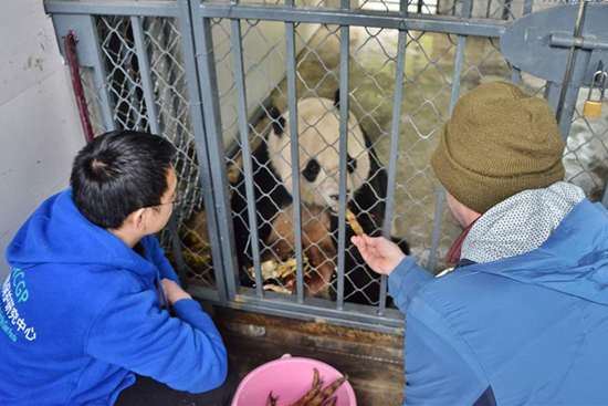U.S. -born panda to stay in SW China's quarantine for month