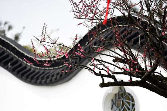 Plum blossom festival opens in Yancheng, China's Jiangsu