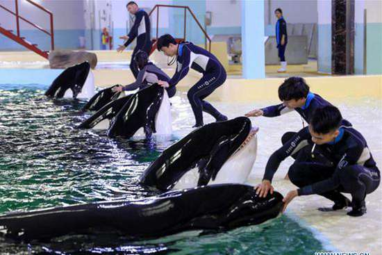 China's first killer whale breeding base put into operation in Guandong