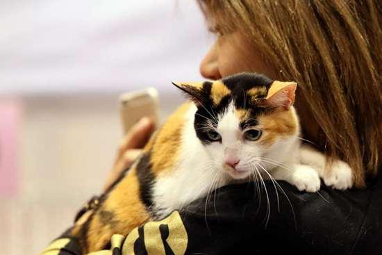 4th Championship Cat Show kicks off in Hong Kong