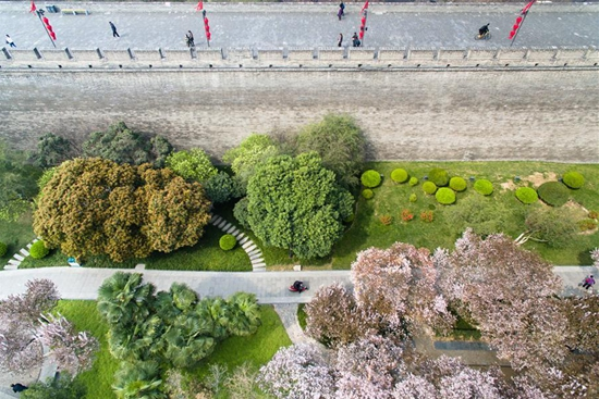 In pics: spring scenery in NW China's Xi'an City