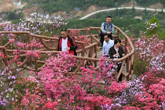 Azalea blossoms attract tourists in central China's Hubei