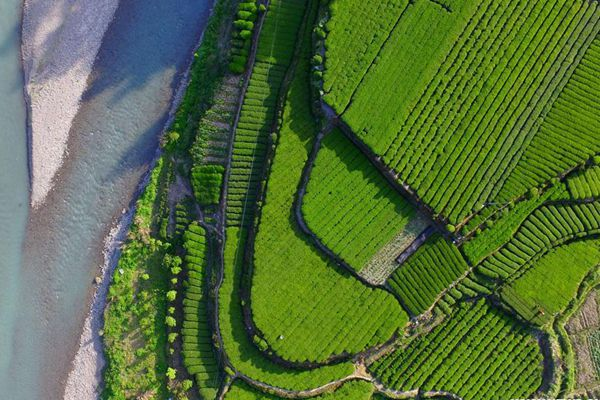 Aerial view of tea gardens in central China's Hubei