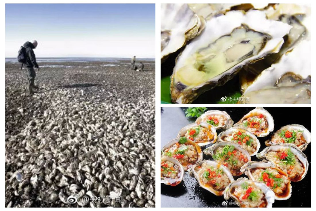 Internet users 'advise' Denmark on oyster problem